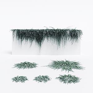 爬藤植物3D模型-1003T26