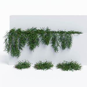 爬藤植物3D模型-1003T27