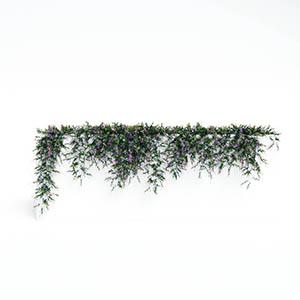 爬藤植物3D模型-1003T28
