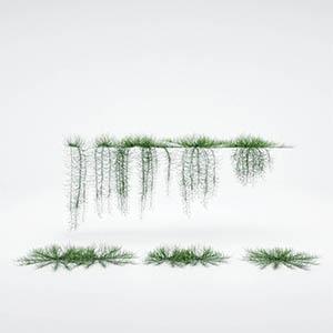 爬藤植物3D模型-1003T29