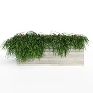 爬藤植物3D模型-1003T31