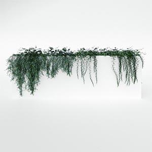 爬藤植物3D模型-1003T32