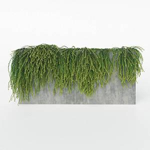 爬藤植物3D模型-1003T33