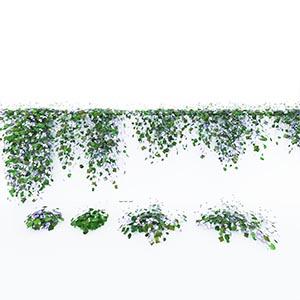 爬藤植物3D模型-1003T35