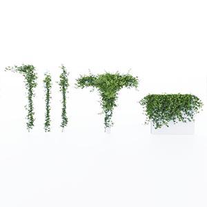 爬藤植物3D模型-1003T36