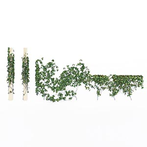 爬藤植物3D模型-1003T37
