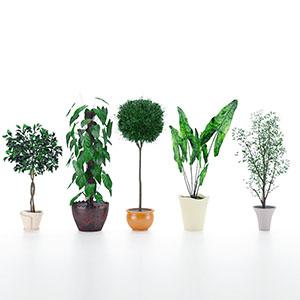 盆栽3D模型-1007P98