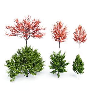 树3D模型-100101S76