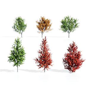树3D模型-100101S78