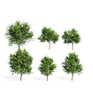 树3D模型-100101S79