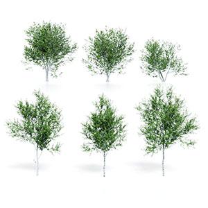 树3D模型-100101S80