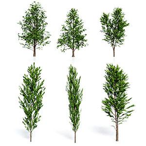 树3D模型-100101S81