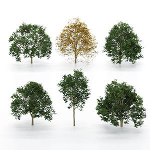 树3D模型-100101S84