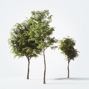 树3D模型-100101S87