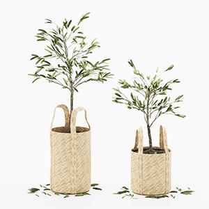 橄榄树盆栽3D模型-1007P101