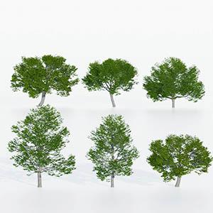 树3D模型-100101S89