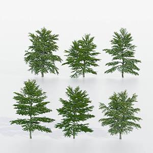 树3D模型-100101S90