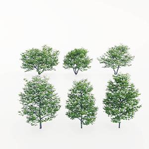 花树3D模型-100102S48